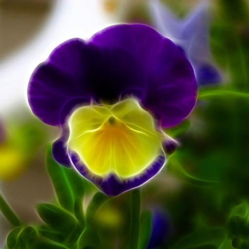 三色紫罗兰墙纸 個人化 App LOGO-APP試玩