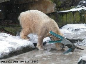 Photo: Knut nimmt die Misere genauer unter die Lupe ;-)