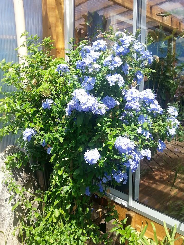 floraisons du mois - Page 27 1SaXxChoEE0xTQzcKhvB8k-Z4KuqWIt000ivb8aJjE9n=w717-h955-no