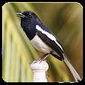 Kacer Birds icon