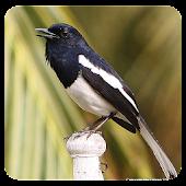 Kacer Birds