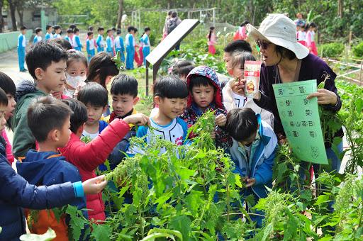 1081203等紅藜的花穗成熟後就會由綠色轉變成鮮艷的顏色囉