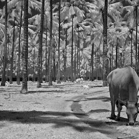 Heaven by Drajat Setiawan - Landscapes Travel