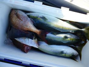 Photo: シモカワさんの釣果です。真鯛、イシダイ、ヤズ・・・