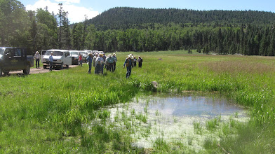 Photo: Healthy sub-irrigated meadows deserve a closer look