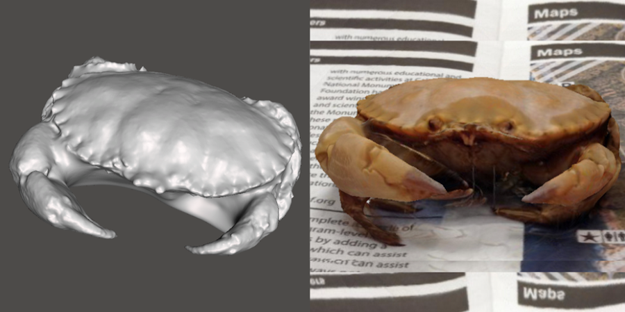 A scan and picture of a Rock Crab (Cancer antennarius)