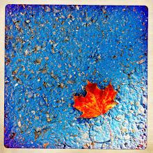 Photo: Autumn leaf