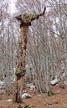 Photo: Jesen života jednog stabla u jesen 2013.