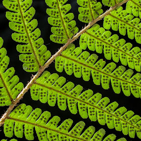 by Chloe Tatum - Nature Up Close Leaves & Grasses