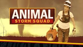 Animal Storm Squad thumbnail