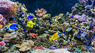 El Aquarium de Roquetas reabre sus puertas mañana.