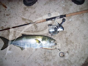 Photo: pesca de anjovas nocturnas con sea shot. Borja 01
