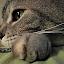 Pensive by Regina Watkins - Animals - Cats Portraits ( treats, cat, pensive, avalon, kitty, , #GARYFONGPETS, #SHOWUSYOURPETS )