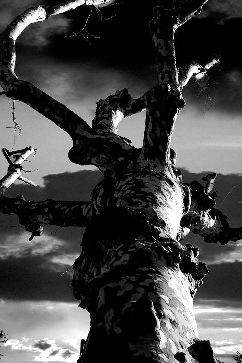 cercando il cielo di Sergio Catitti