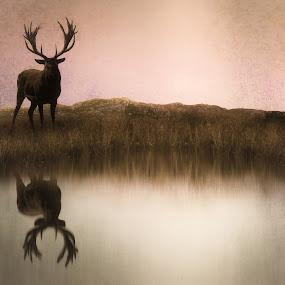 The Stag at Dusk by Jennifer Woodward - Digital Art Animals ( wild, animals, wildlife, stag, mammal, deer )