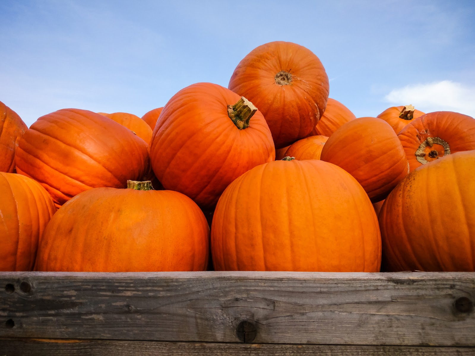 Things to Do to Get in the Spirit of Autumn-image