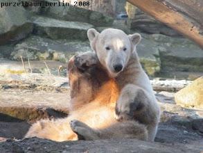 Photo: Eisbaerchen Knut in Denkerpose ;-)