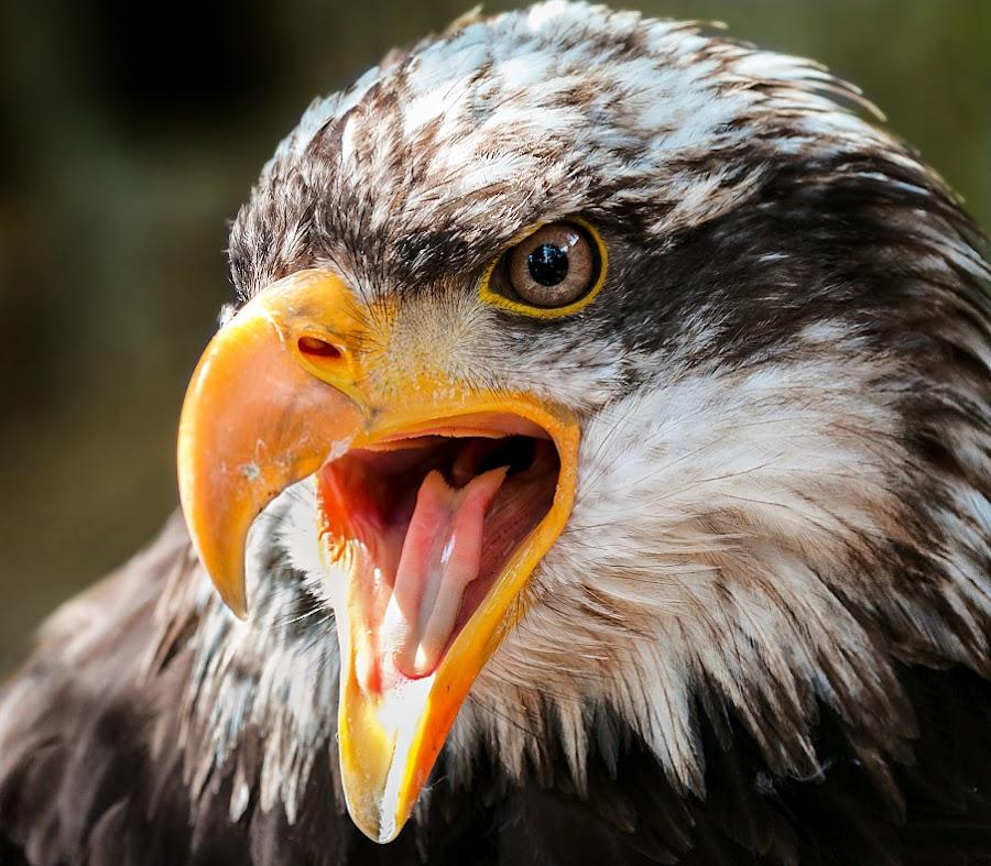 by Renos Hadjikyriacou - Animals Birds (  )