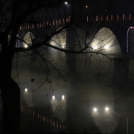 Foggy Bridge by Cátia Moreira - City,  Street & Park  Night ( lights, foggy, winter, night photography, tree, cold, fog, christmas lights, christmas, night, bridge, light, nightscape )