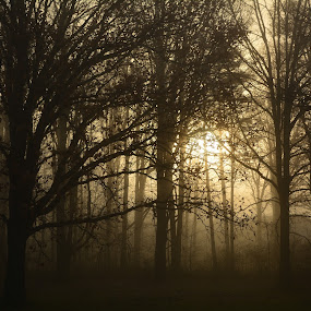 Fog, sun and trees 2 by Thomas Fitzrandolph - Landscapes Sunsets & Sunrises ( nature, fog, niagara county ny, trees, nikon d5200, sunrise, sun, lockport ny )