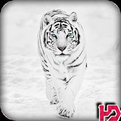 White Tiger Wallpaper Hd