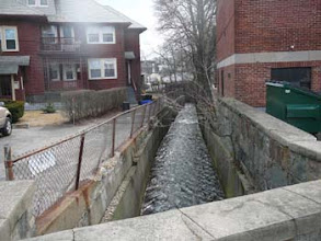 Photo: Downstream from 31 Revere Rd 1st true 'daylighted' section which will support spawning