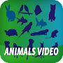 Animals Video APK icon