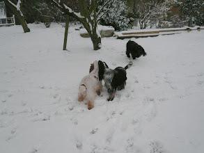 Photo: Nos cockers dans la neige.