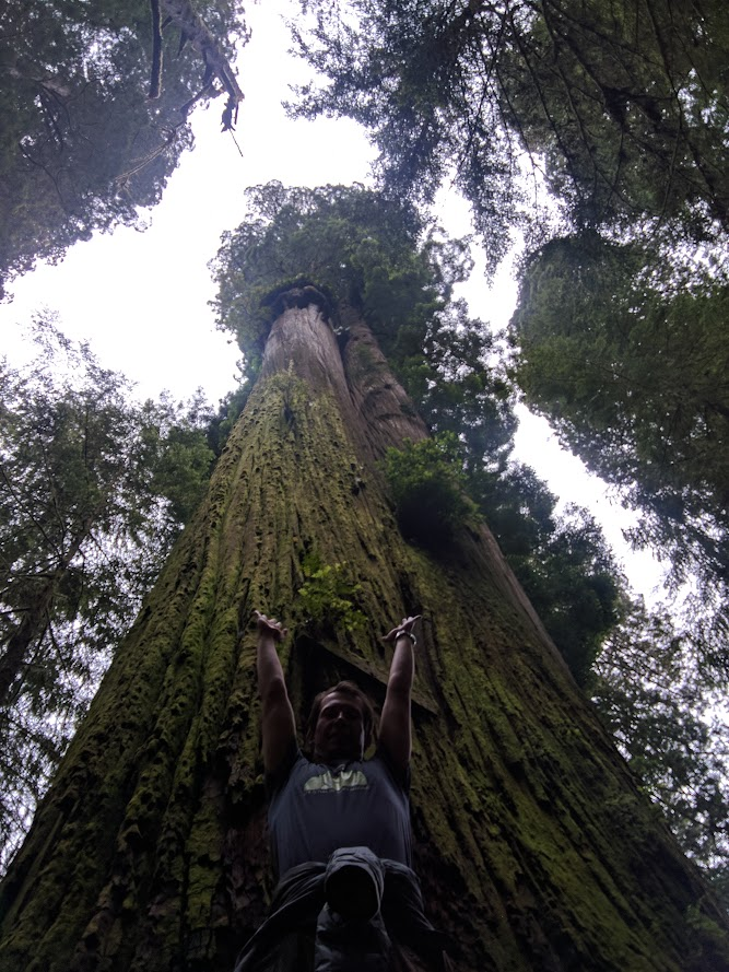Boy Scout Tree - One of the tallest living creatures on this planet, Redwoods, CA
