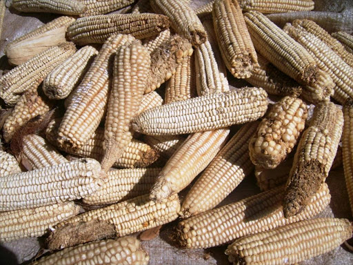 Meru launches aflatoxin testing lab to tame poisoning