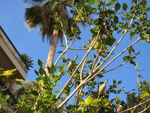 Photo: Nie wiem, co to za drzewo?