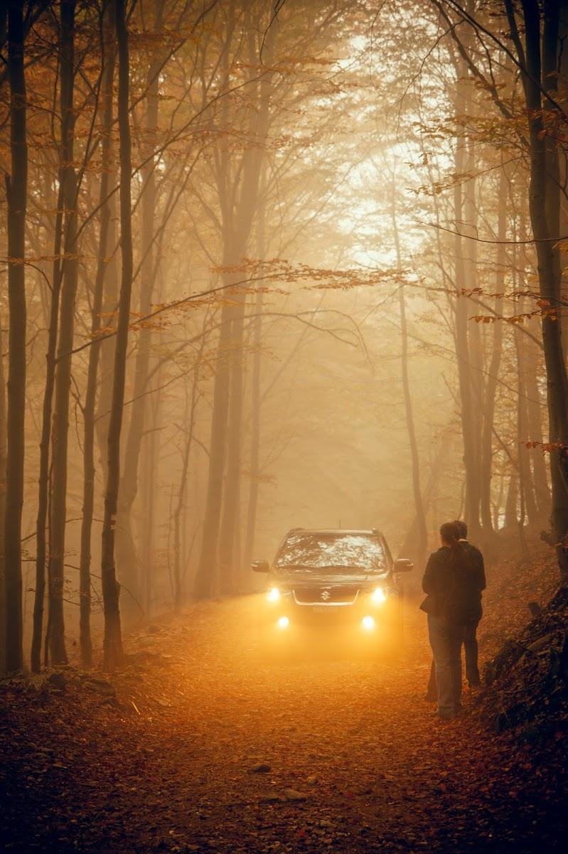 Nel bosco, in autunno e con la nebbia di mariateresatoledo