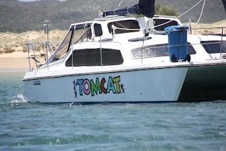Photo: Year 2 Day 196 - Tomcat