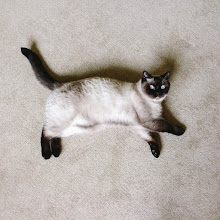 Photo: Happy #Caturday ! 😽