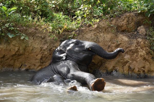 Watch the elephant taking a bath