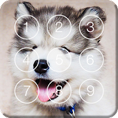 Cute Hasky Puppies Screen Lock