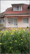 Photo: Crăițe, cărujele (Tagetes)  - de pe str. Trandafirilor - 2016.09.24