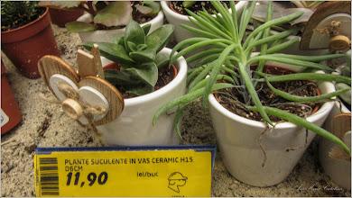 Photo: Plante suculente - din Turda,  DEDEMAN - 2019.02.21