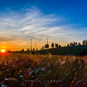 Grass sunset by Adrian LUPSAN - Landscapes Sunsets & Sunrises ( winter, grass, sunset, green, white, sun )