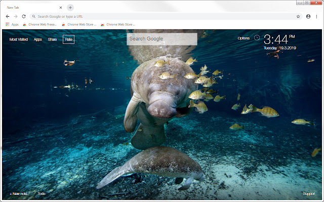 Manatee HD Wallpapers Manatees New Tab Themes