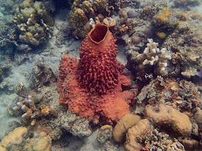 Photo: Barrel Sponge, Chindonan Island, Palawan, Philippines.