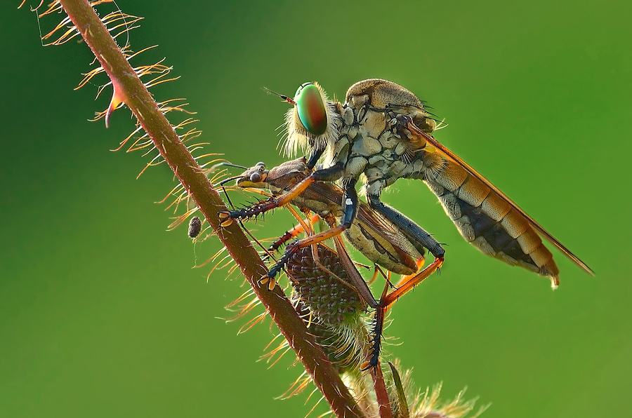 eat by Vandie Ndie - Animals Insects & Spiders