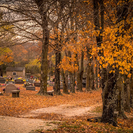 CLIO CEMETERY by Jennifer  Loper  - City,  Street & Park  Cemeteries ( fall colors, autumn, trees, cemetery )