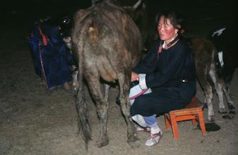 Photo: 03184 ブルド/ハスバータルイ家/牛の乳搾り