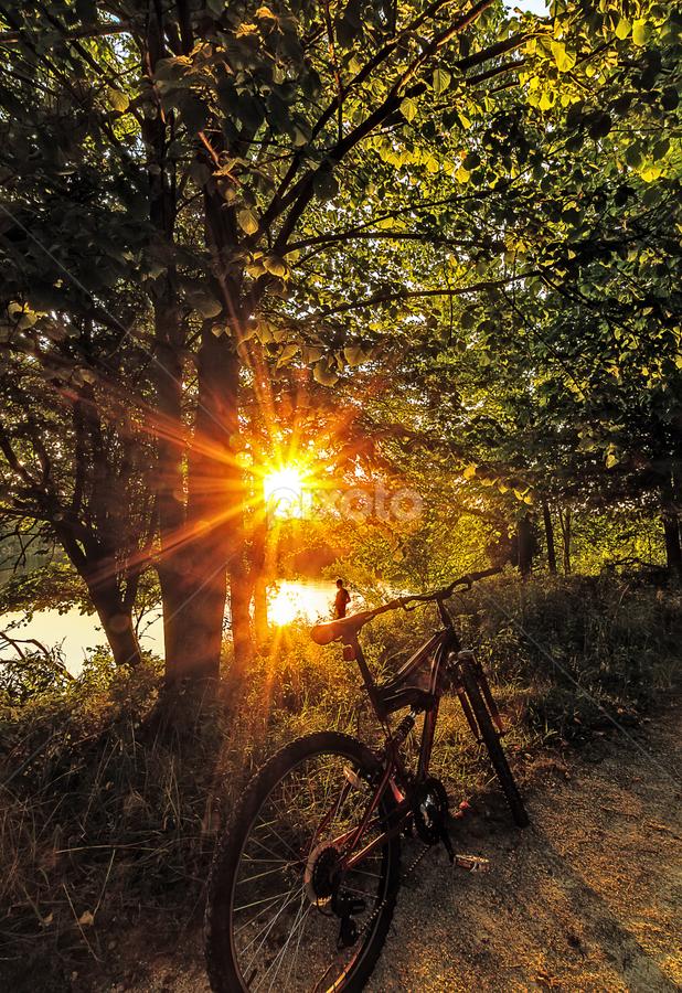 Bicycle Rider Fishing there . by Sushmita Sadhukhan - Transportation Bicycles ( sunset, fishing, glowing tree, bicycle )