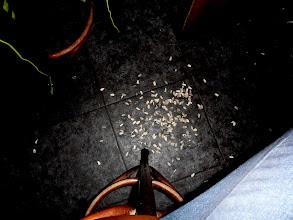 Photo: Mistni droga: slunecnicovy saminka. Slupky se plivaji jednoduse na zem. At jste kdekoliv.