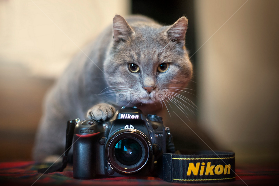 Look at me and say.... meow by Alberto Ghizzi Panizza - Animals - Cats Playing ( kitten, cat, 7100, photographer, nikon, camera, lens, object )