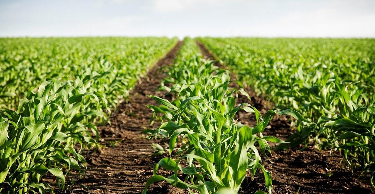 Agricoltura e Prodotti Fitosanitari