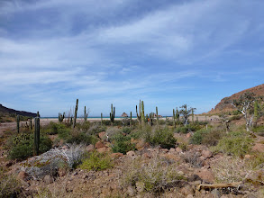 Photo: Cardon cacti species and other island flora.