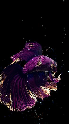 Betta Fish Live Wallpaper FREE 1.4 screenshots 3